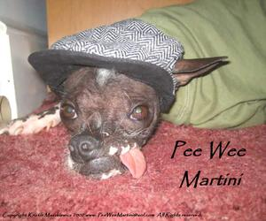 Peewee_2007_pretty_web1
