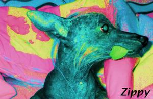 Zippyzoomhead2