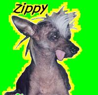 Zippyzoomstpattys